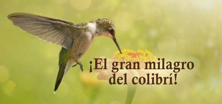 Front slider - ¡El gran milagro del colibrí!