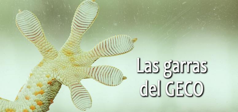 Las garras del geco